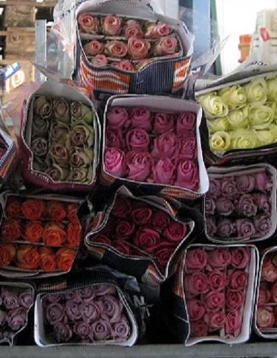 contamos con variedad de rosas importadas todo el año